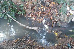 Dân bức xúc mương ô nhiễm, hãng nước mắm nói xả thải vì sự cố... chuột cắn