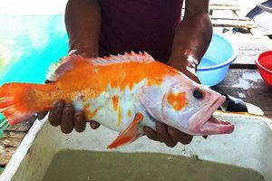Phát hiện loài cá lạ chưa từng xuất hiện ở Việt Nam