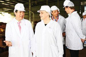 Thứ trưởng Hà Lan thăm vùng chăn nuôi bò sữa bền vững của sữa Cô Gái Hà Lan