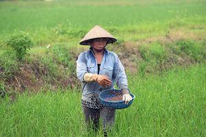 Bảo đảm an toàn vệ sinh lao động trong sản xuất nông nghiệp