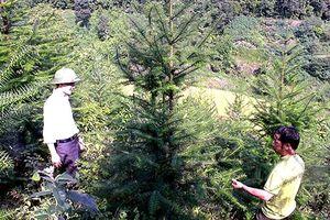 Hà Giang quy hoạch, hỗ trợ người dân trồng rừng