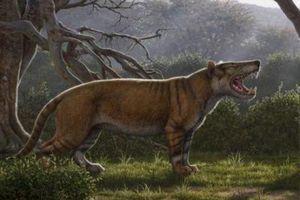 Loài thú ăn thịt khổng lồ từng đứng đầu chuỗi thức ăn tại châu Phi