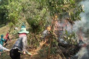 Sơn La: Nắng nóng gây cháy 60ha rừng trồng
