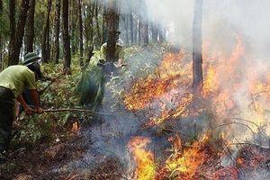 Báo động đỏ về cháy rừng trên cả nước
