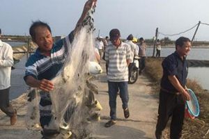 Bình Thuận: Nuôi thành công loài cá chim vây vàng đặc sản ở ao đất