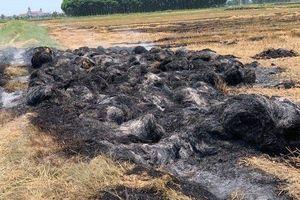 Không thu được tiền bảo kê, côn đồ đốt cháy gần 1.000 cuộn rơm tại ruộng