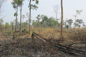 Gia Lai: Khởi tố vụ đốt phá hơn 4 ha rừng tại huyện Ia Pa
