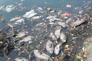 Cá tiếp tục chết trắng bên cạnh trạm xử lý nước thải tại Đà Nẵng