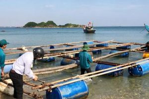Quảng Ngãi: Hỗ trợ tiền cá chết, cấm nuôi ở biển KKT Dung Quất
