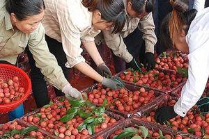 Thiếu 'lá bùa' xác nhận này, đặc sản Việt hết đường sang Trung Quốc