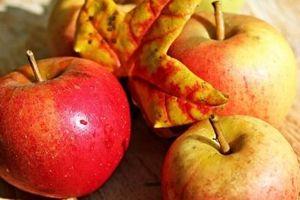 7 loại trái cây giúp mát gan, giải nhiệt không thể bỏ qua trong mùa hè