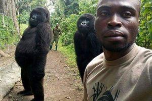 Bức ảnh 'selfie' với khỉ đột được yêu thích