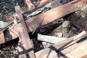 Bắt giam nhóm đối tượng phá rừng gỗ quý tại Phong Nha – Kẻ Bàng