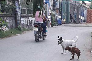 Dân đăng ký nuôi chó, phường không nhận là sai!