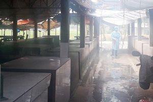 Hà Nội: Dịch tả lợn châu Phi bùng phát mạnh ở xã Bắc Sơn