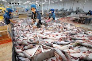 Mỹ bất ngờ đẩy mức thuế bán phá giá cá tra Việt Nam lên cao