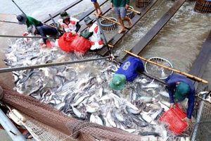 Bộ Thương mại Mỹ công bố mức thuế cuối cùng đối với cá tra Việt Nam