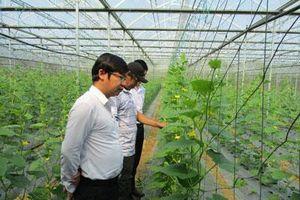 Đà Nẵng: 'Liều' vay vốn trồng rau hữu cơ, trồng nấm mà giàu có