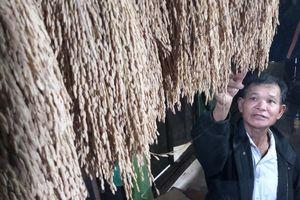 Người giữ hương lúa baton của đồng bào Bh'noong