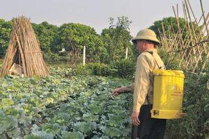 Hà Nội: Từng bước xây dựng nền sản xuất nông nghiệp sạch