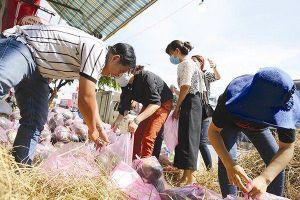 'Nông sản bán đổ đống thì sao cạnh tranh với hàng ngoại'