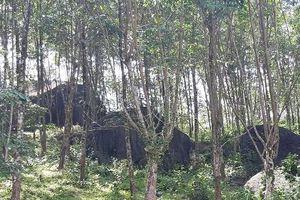 Liên bang Đức tài trợ hơn 47 tỷ đồng để bảo tồn đa dạng sinh học rừng tại Huế