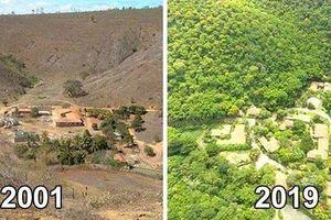 Nhiếp ảnh gia người Brazil làm nên kỳ tích, tái sinh khu rừng chết trong suốt 20 năm