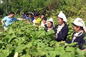 Tạo nguồn cán bộ ở Tuyên Quang