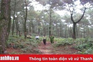 Huyện Tĩnh Gia: Tăng cường các biện pháp phòng cháy, chữa cháy rừng