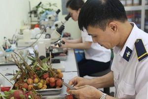 Việt Nam kết nối chứng nhận kiểm dịch thực vật qua Cơ chế một cửa ASEAN
