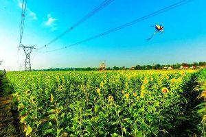Cánh đồng hoa Hướng Dương ở Quảng Bình hút du khách trong dịp nghỉ lễ 30/4