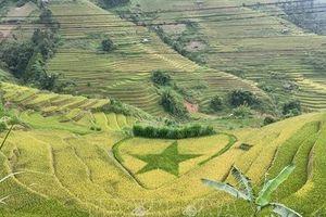 Khai thác du lịch nông nghiệp - Bài 2: Một dòng sản phẩm chủ đạo