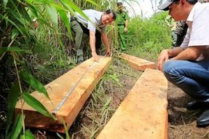 Khai thác rừng trái pháp luật có thể bị phạt đến 1 tỷ đồng