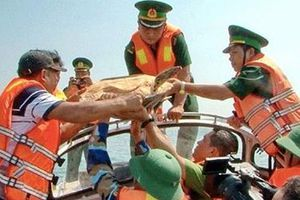 Thả một cá thể rùa biển về lại môi trường tự nhiên