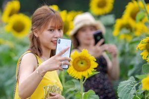 Giới trẻ náo nức check-in cánh đồng hoa hướng dương mới ở Huế