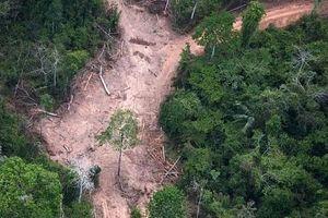 Brazil: Báo động đỏ tại các 'thiên đường' sinh thái