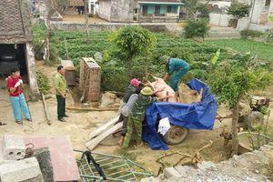 Thanh Hóa: Dịch tả lợn Châu phi tiếp tục lây lan đến huyện Hậu Lộc