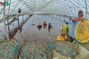 Đâu là điểm nghẽn lớn nhất của ngành tôm Việt Nam?