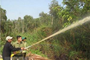 Một nửa rừng tràm U Minh Hạ đang ở mức báo động cháy cao nhất