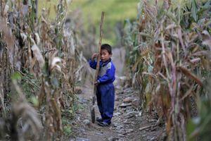 Triều Tiên cắt khẩu phần thấp kỷ lục, báo động an ninh lương thực