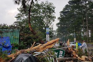 Sét đánh gãy cây thông cổ thụ ở Đà Lạt, nhiều người thoát nạn