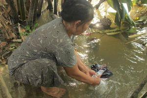 Nhiều hộ gia đình ở Hậu Giang chưa được sử dụng nước sạch