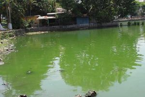 Đà Nẵng: Hồ nước giữa công viên bốc mùi hôi thối