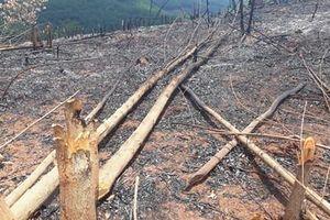 Hình ảnh rừng tái sinh tại tỉnh Bình Phước bị phá tan hoang