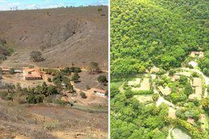 Trồng 2 triệu cây trong 20 năm