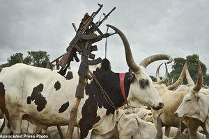 Từ chối kết hôn để đổi lấy 40 con bò, cô gái trẻ bị đánh chết