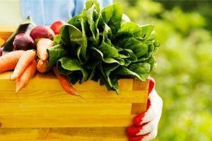 Làm sao để rau củ quả tươi ngon và giữ được lâu trong ngày hè nắng nóng?