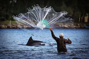 Độc đáo cảnh cá heo lùa đàn cá vào bờ cho ngư dân quăng lưới