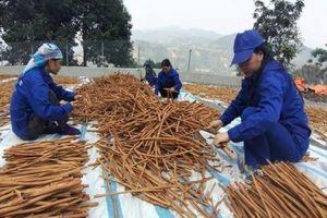 Khuyến nông Lào Cai: tăng quyền năng kinh tế cho phụ nữ nông thôn