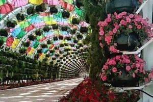 Ngỡ ngàng cảnh hoa phủ đầy công trình công cộng ở Qatar